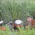 Prevrtanje traktora uzelo tri života, stradale baka i unuka (5) i 18-godišnjak
