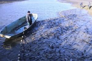 Rekonstruisat će ribnjake: Planiraju proizvesti 500 tona ribe godišnje