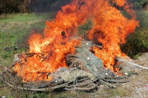 Spalili mreže krivolovcima jer izvuku toliko ribe da završi kao hrana za svinje