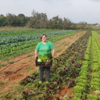 Eko povrće s OPG-a Čubrilo do kupaca stiže direktno s polja - ujutro berba, popodne prodaja