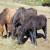 Brdski konj više nije ekstremno ugrožena vrsta - ima 283 grla u 8 država