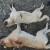 Lovac usmrtio pastiru dva psa