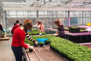 Cirkularna ekonomija - na krovu zgrade uzgajaju grgeče i povrće