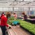 Kružno gospodarstvo – na krovu zgrade uzgajaju grgeče i povrće