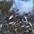 Opet pomor ribe u rijeci Spreči. Krive otpadne vode iz farme?