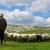Rad na farmama: Posla ima, zainteresiranih nema
