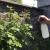 Kalcijum iz mleka jača i štiti biljke - kako da ga iskoristite?