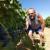 Lekcija dr.sc. Anđelka Vrsaljka: Unatoč mrazu i suši u njegovom vinogradu rekordan urod