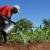 Zašto je Francuska odustala od ulaganja u afričku poljoprivredu?