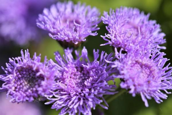 10 biljaka koje će otjerati komarce i druge bube