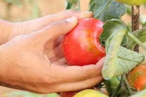 Sudjelujte na obuci za poljoprivrednike sa područja Bijeljine i Trebinja