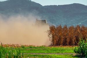Obrano 50 posto kukuruza u prijedorskoj regiji - prinos dobar