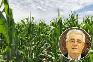 Čini vam se da kukuruz zbog vremena zaostaje u rastu?