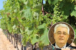 Što je u kolovozu više kiše, to će i vina biti više