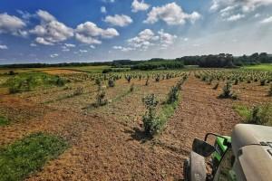 Površine pod organskom poljoprivredom u EU porasle za 34% od 2012. godine
