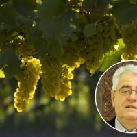 Tko nije dobar podrumar, uzalud je dobar vinogradar