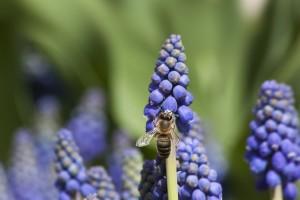 Vrijeme povoljno za sadnju, sjetvu ili suzbijanje korova