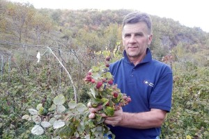 Opet cvjeta i rađa voće, bit će oštra zima!?