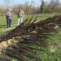 U Slavoniji podižu nasad od 200 hektara oraha sorte chandler i planiraju agroturizam
