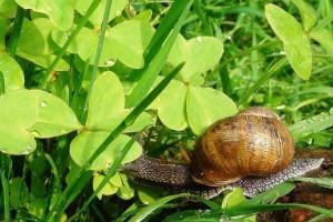 Smjena pljuskova i sunčanog razdoblja - očekujte razvoj biljnih bolesti i više štetočina