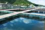 Održivi razvoj akvakulture u svijetu