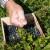 Što je novo u svijetu vrtlarskog alata?