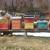 Almir Hujdur: Pčelinjim ubodima se borim protiv multiple skleroze
