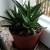 Evo koje sobne biljke djeluju opuštajuće na vaš organizam