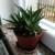 U hladnim danima pred nama zaštitite sobne biljke jednostavnim i prirodnim načinima