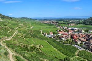 """Vinogradari u strahu od gubitka zemljišta zbog """"zone bez pesticida"""""""