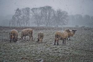 Žuti i narančasti meteo alarm: Udari vjetra i obilne padavine