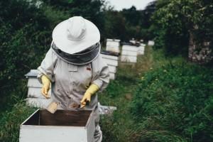 Pravilnik o provedbi mjera Nacionalnog pčelarskog programa