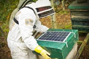 U samo godinu dana sakupila više podataka o pčelarstvu nego svi pčelari u povijesti