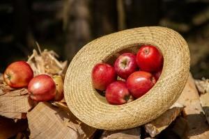 Fruit Logistica 2020.- jedan od najvećih poljoprivrednih sajmova na svetu