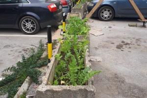 Kinezi u Nišu: Sade povrće u žardinjerama, da zemlja ne ostane neiskorišćena