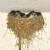 Tona kukuruza za kuću sa najviše lasta