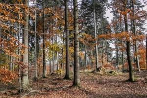 Federalna vlada izmijenila i dopunila Odluku o šumskoprivrednim osnovama