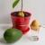 Zasadite egzotično bilje u saksiji: đumbir, avokado ili bor?