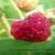 Kako napraviti mamac za praćenje i ulov azijske mušice ploda