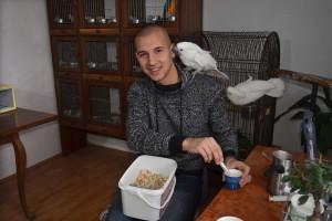 Uzgajivač Stefan Švabić svakih 45 minuta hrani ptiće papagaja