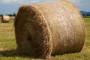 Apsurd u Agenciji za plaćanja u poljoprivredi