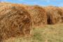 Poljoprivreda ima najveći potencijal u jugo-istočnoj Europi
