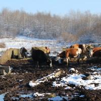Norbert Lins: Hrvatski poljoprivrednici mogu računati na pomoć kod ujednačavanja potpora
