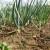 Zar se prijedlog Zakona o sjemenu nije mogao riješiti bez trzavica s poljoprivrednicima?