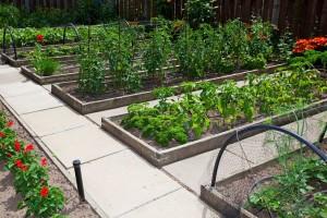 Proizvodnja hrane u urbanoj bašti i njene prednosti