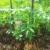 Mala bašta u slami - jednostavan uzgoj povrća i na lošijim zemljištima