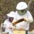 Kako klimatske promene utiču na organsko pčelarstvo?