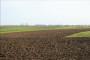 Bayer dani polja