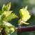 Bayer savjeti za vinogradare 16.04.-22.04.2018.