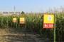 Prestižna nagrada za Bc hibride kukuruza